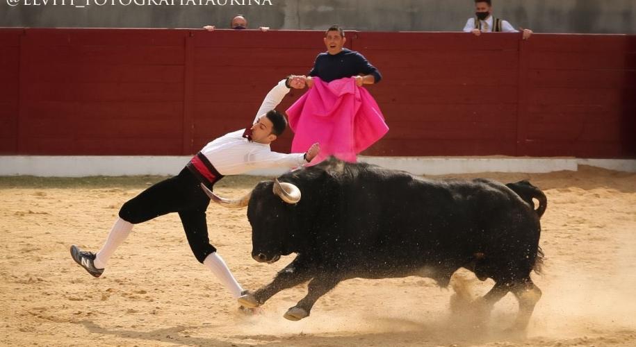 El Peta toro Dominguez Camacho